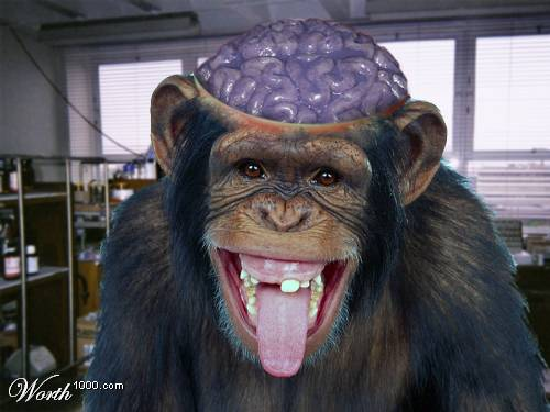 "You don't control the monkey dance, it controls you."" – Rory ...: conflictresearchgroupintl.com/the-monkey-brain-marc-macyoung"